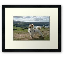 Proud Timmy Framed Print