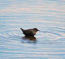 little dipper by Jean Poulton