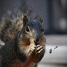 Squirrel by Savannah Gibbs