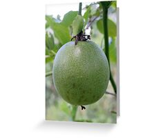 An Unripe Passionfruit Greeting Card
