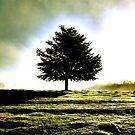 one tree by brett watson