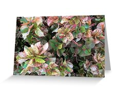 Tropical Leaves at Mission Beach Greeting Card