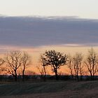 Sunrise Horizontal Clouds And Trees by Lisa Diamond