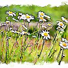 Oxeye Daisies watercolour by PhotosByHealy