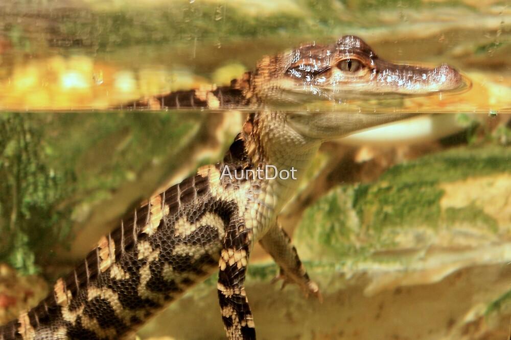 Baby Alligator by AuntDot