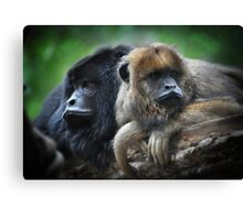 Male and Female Howler Monkeys  Canvas Print