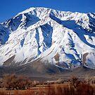 Mountain Dreams by Carol Barona