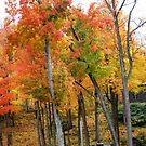 Beautiful colors by Esperanza Gallego