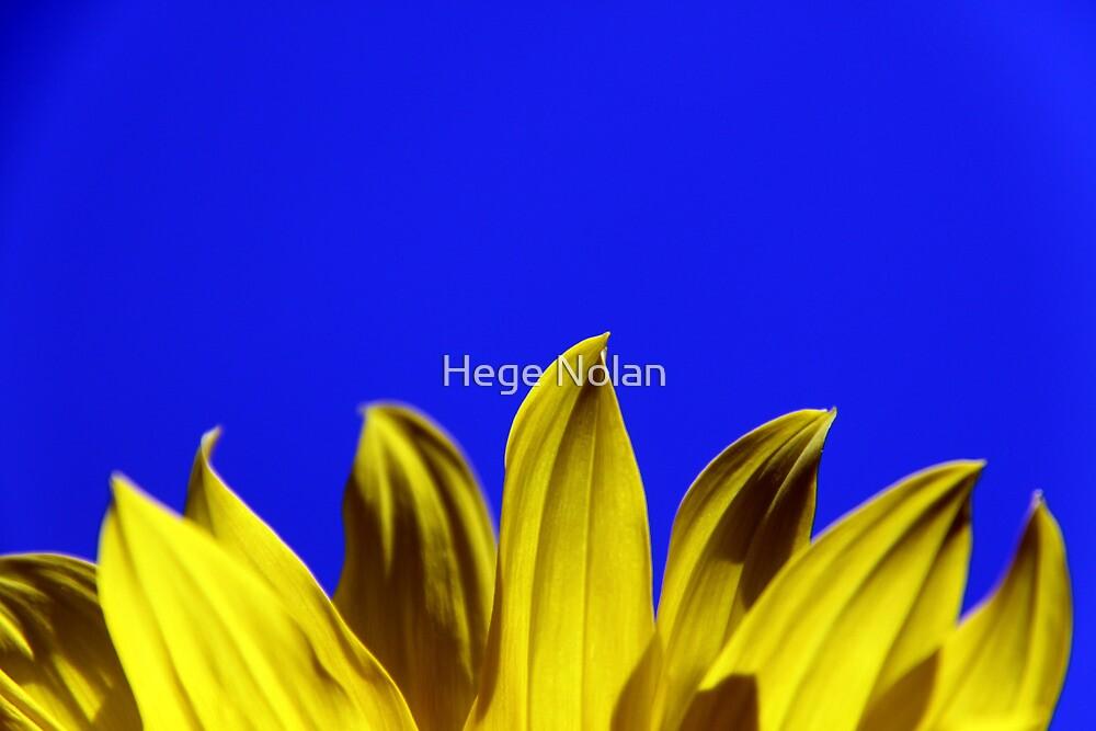 Rising SunFlower by Hege Nolan