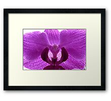 Bird face in Purple Orchid Framed Print