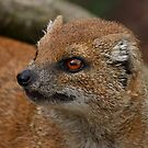Mongoose by Mark Hughes