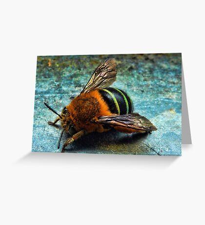 """Bumble Bee"" Greeting Card"