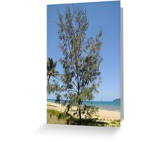 She Oak Tree at South Mission Beach Greeting Card