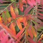 autumn colours by tamarama