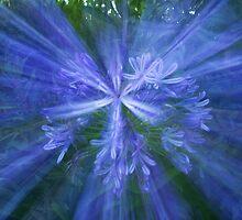 Arty flower by Anna Calvert