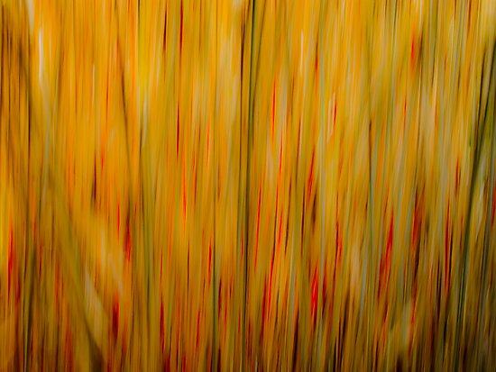 Winter Grasses #1 by Tom Vaughan