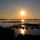 Assateague Island sunset by dandefensor