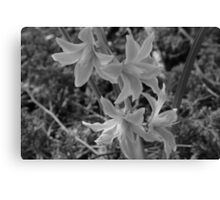 A Cluster of Flowers Canvas Print