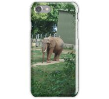 The Ivory Tusk iPhone Case/Skin
