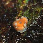 Nudibranch ? by KOKOPEDAL