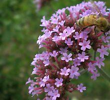 Busy Bee by Bernie Garland