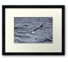 Flying Gull Framed Print