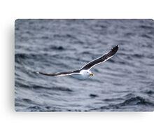 Flying Gull Canvas Print