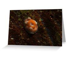 Nudibranch?? Greeting Card