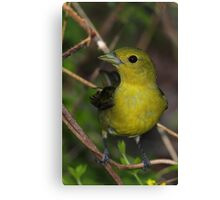 Scarlet Tanager Female Canvas Print