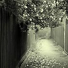 Blossom on Laneway by Julie Sleeman
