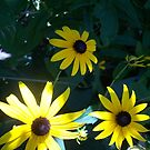 Three in the shade by Nella Khanis