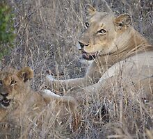 A Mothers Watch:- Lioness and her cub by starvingphoto