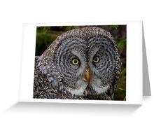 WILD Great Gray Owl Portrait Greeting Card