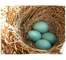 Four American Robin Eggs Poster