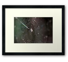Spider Web and Spider Framed Print