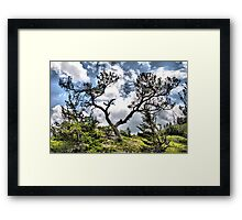 Barely Hanging In There Framed Print