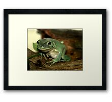 Freddie...The Green Tree Frog Framed Print