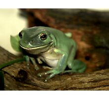 Freddie...The Green Tree Frog Photographic Print