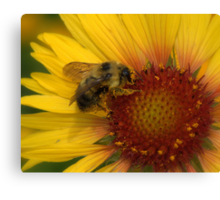 Workin' hard for the honey Canvas Print
