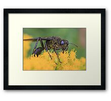 Wasp and Pollen Framed Print