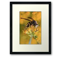Wasp and Dangling Antenae Framed Print