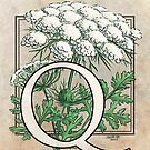 Q is for Queen Anne's Lace card by Stephanie Smith