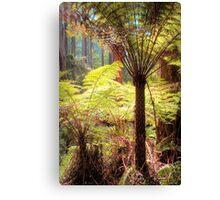 Dandenong Ranges National Park Canvas Print