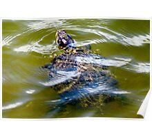 Pond turtle Poster