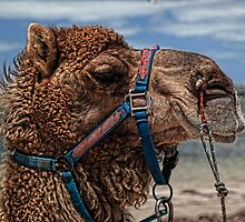 Yes, Virginia...There Are Camels On the Beach by Wendi Donaldson