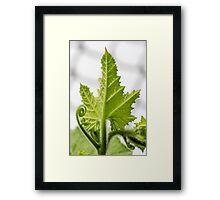 Green Leaf and Veins Framed Print