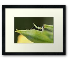 Small Red Eyed Insect Framed Print