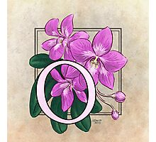 O is for Orchid Photographic Print