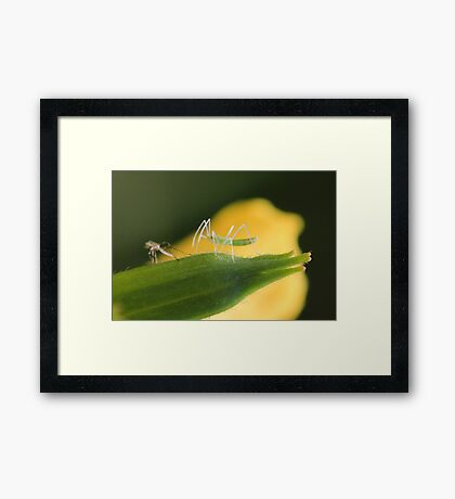 Small Insect and Shell Framed Print