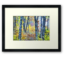 Painted Forest    Framed Print